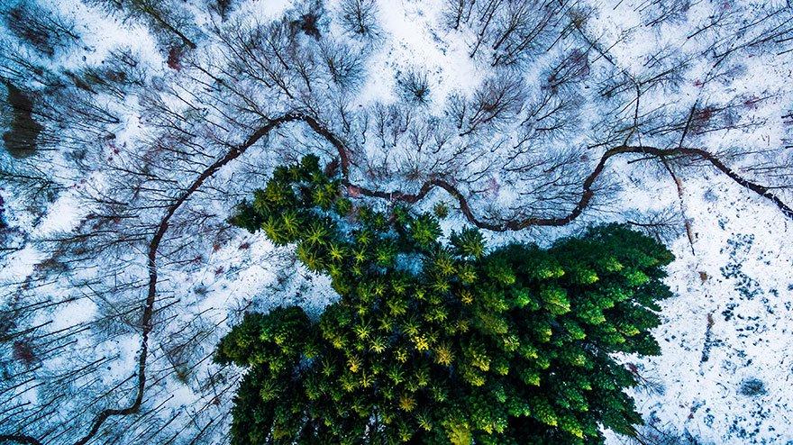 5 Primer premio en la categoría de Naturaleza Kalbyris forest Dinamarca