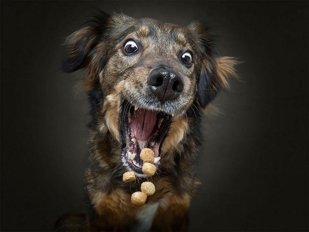 Christian Vieler perros atrapando golosina (3)