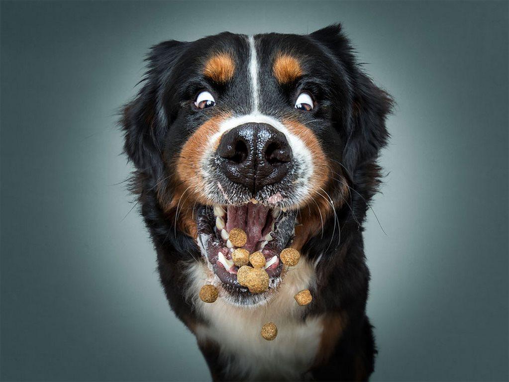 Christian Vieler perros atrapando golosina (4)