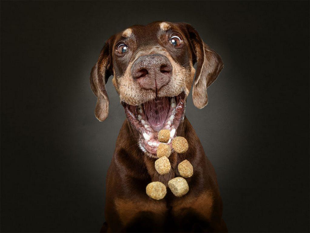 Christian Vieler perros atrapando golosina (5)