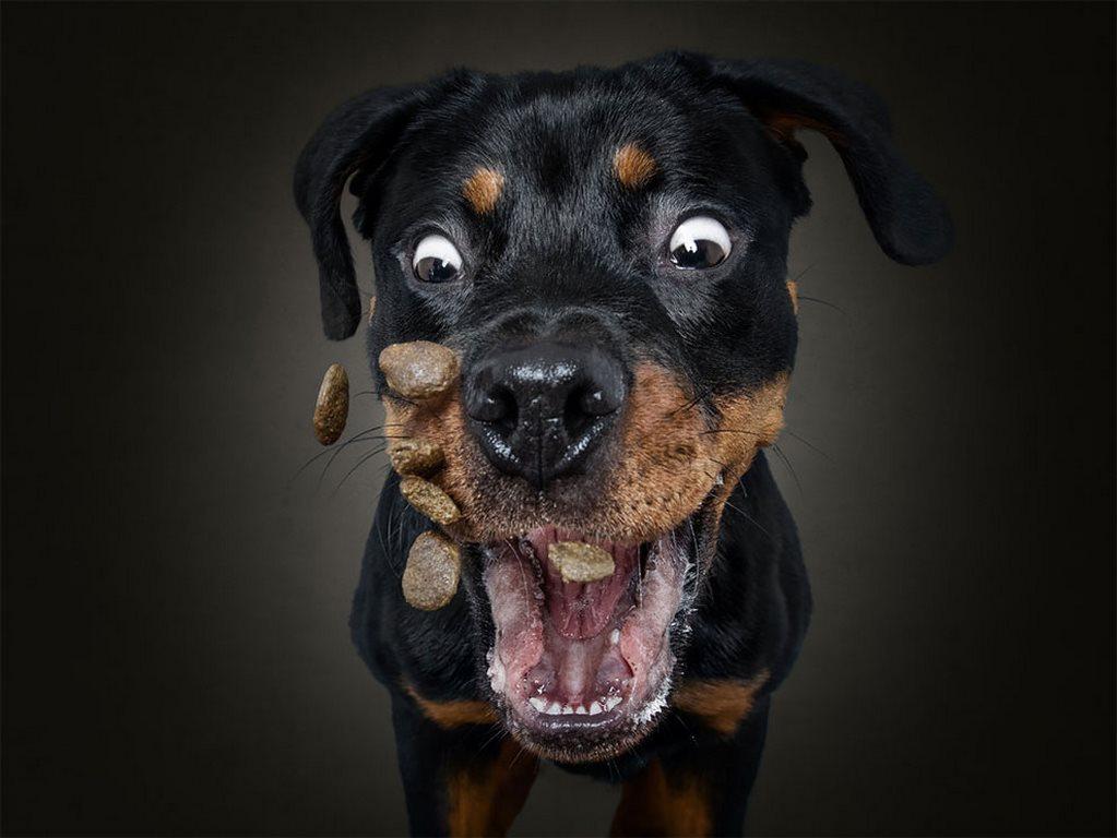 Christian Vieler perros atrapando golosina (6)