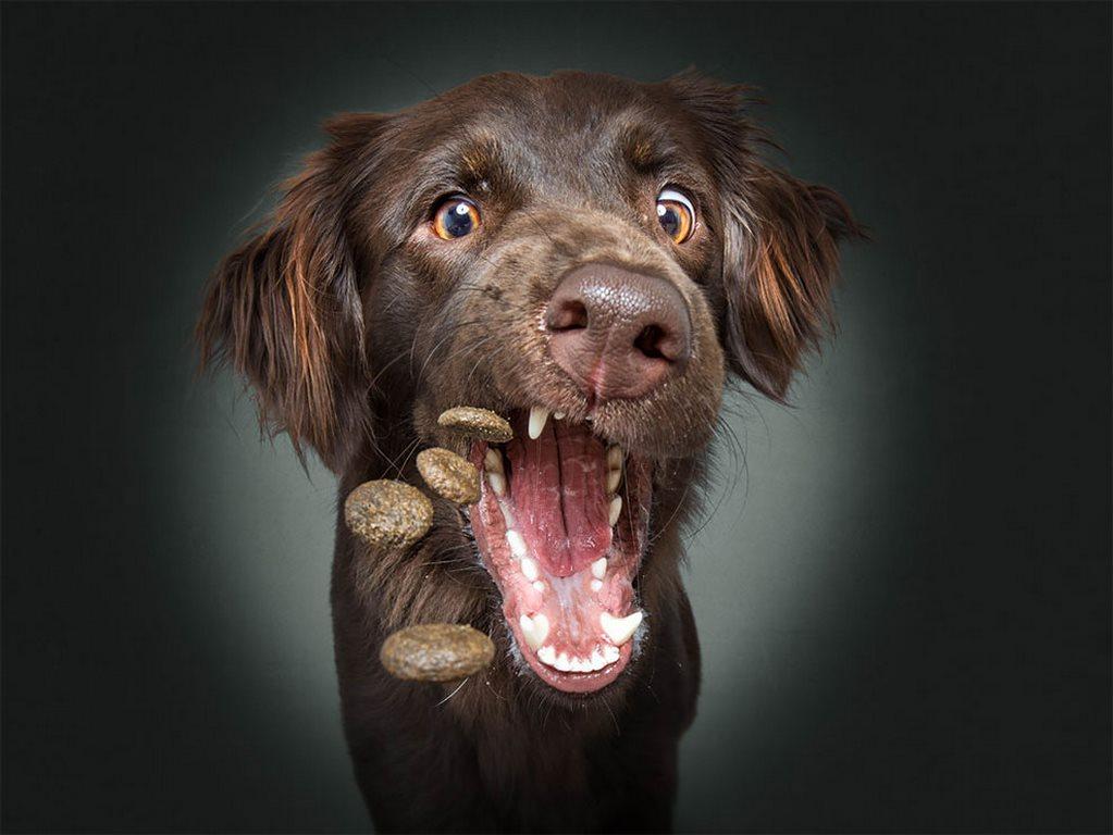 Christian Vieler perros atrapando golosina (7)