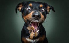 Christian Vieler perros atrapando golosina (8)