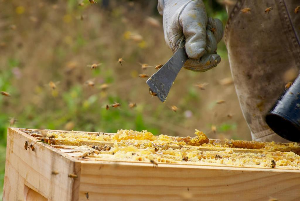 Apiarist working on his Beehive