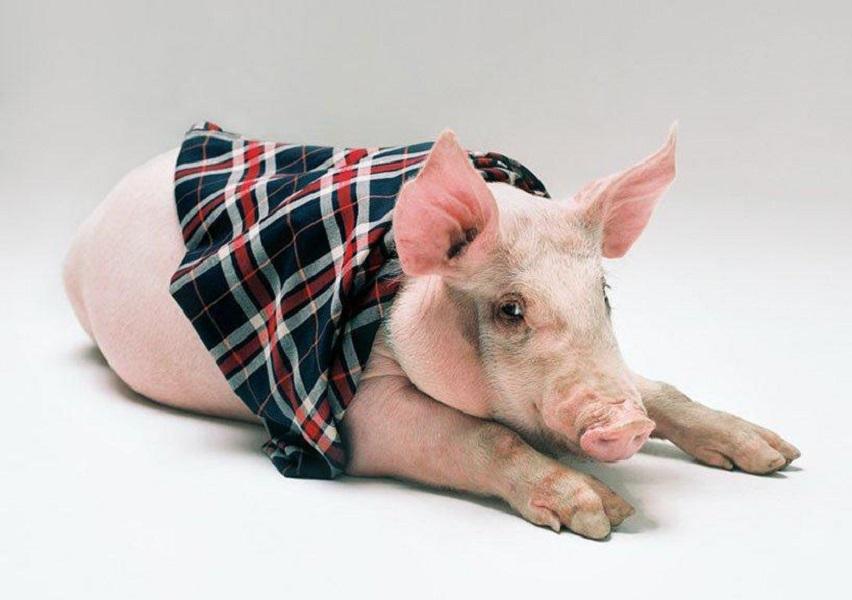 marcas de lujo celebran el año chino del cerdo chancho luxury brands loqueva (1)