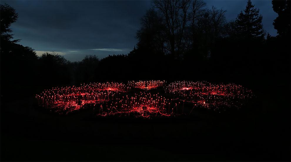 Campo de luz Bruce Munro crea instalaciones de luz en todo el mundo (4)