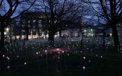 Campo de luz Bruce Munro crea instalaciones de luz en todo el mundo (5)