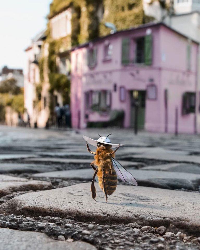 """La primera """"abeja influencer"""" que concientiza sobre el peligro de su especie (3)"""