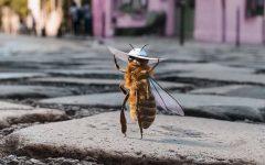 bee-influencer -loqueva