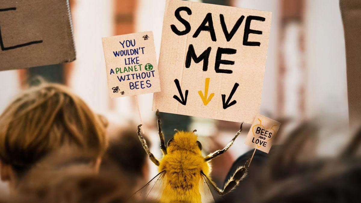 bee influencer loqueva