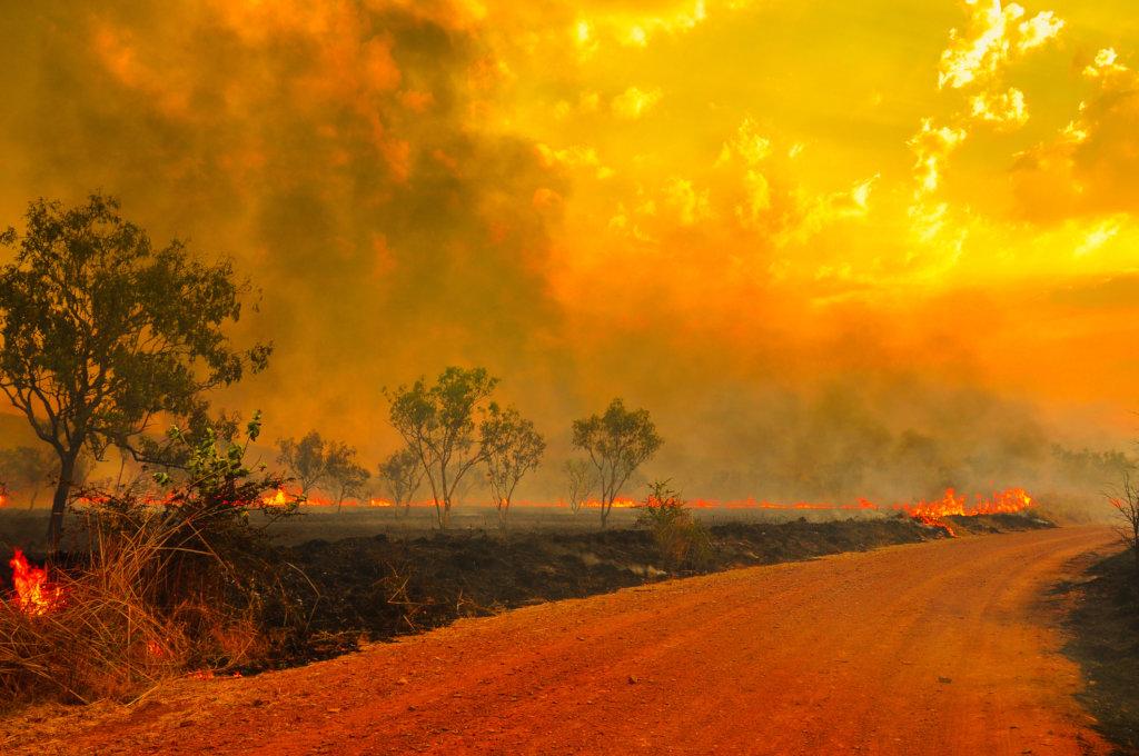 Australia-incendios-WeWork_loqueva (3)