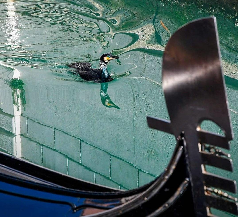 Los canales de Venecia vuelven a tener aguas cristalinas Coronavirus_loqueva (10)