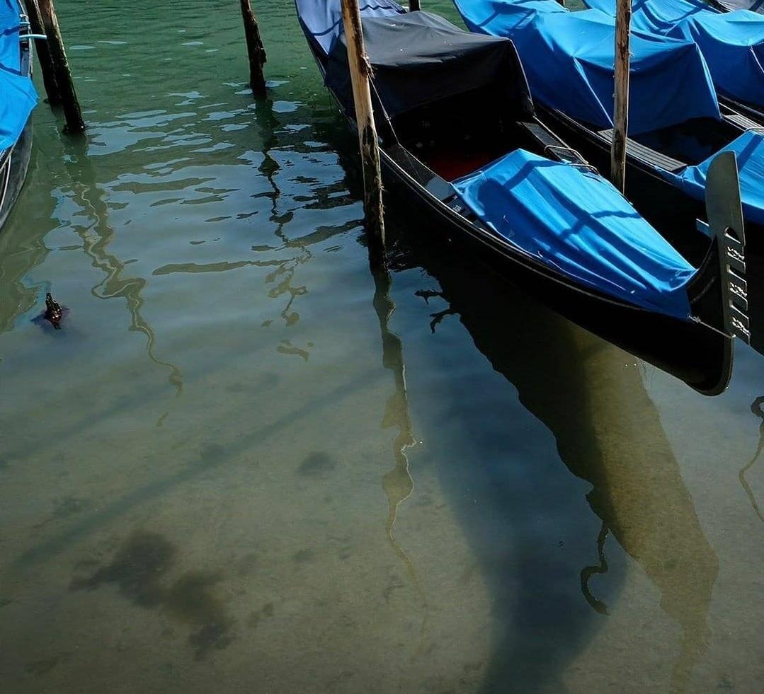 Los canales de Venecia vuelven a tener aguas cristalinas Coronavirus_loqueva (11)