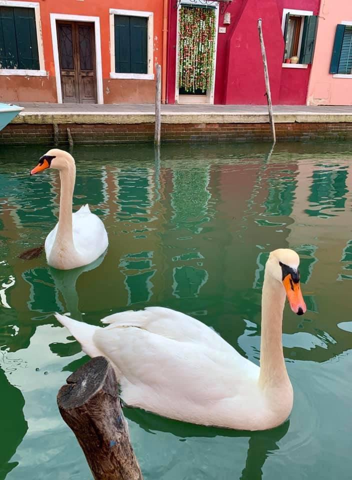 Los canales de Venecia vuelven a tener aguas cristalinas Coronavirus_loqueva (3)