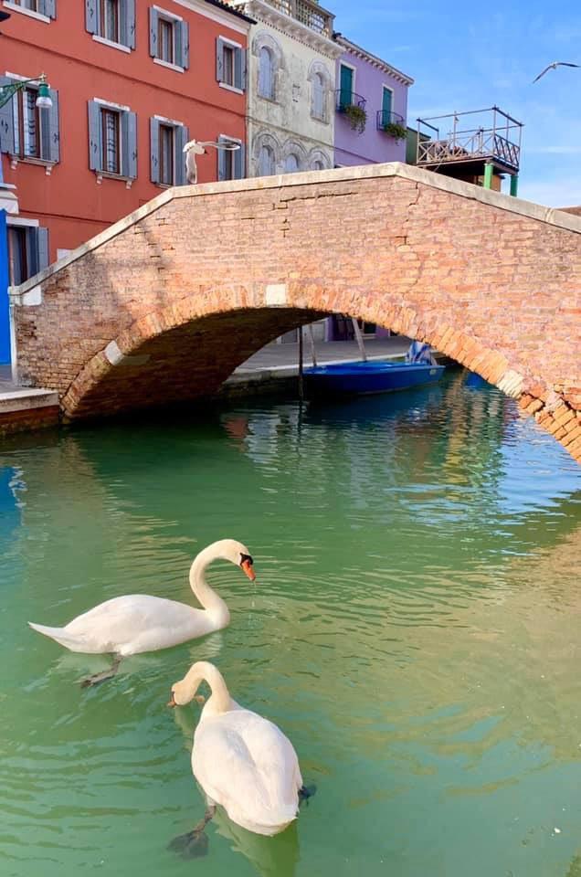 Los canales de Venecia vuelven a tener aguas cristalinas Coronavirus_loqueva (4)