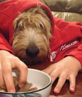 Perros con sus dueños aburridos en cuarentena  human hands loqueva (22)