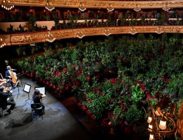 el Liceu de Barcelona reabre con un concierto para 2.292 plantas covid 19 (2)