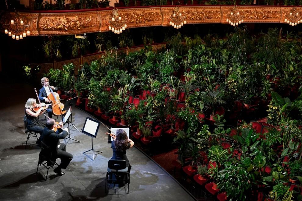 el Liceu de Barcelona reabre con un concierto para 2.292 plantas covid 19 (5)