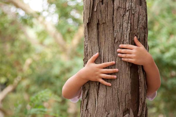 Abrazar árboles como terapia en tiempos de Covid-19 (1)