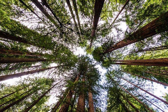 Abrazar árboles como terapia en tiempos de Covid-19 (2)