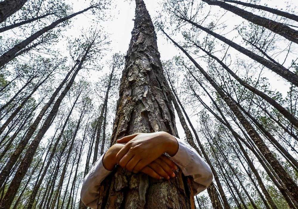 Abrazar árboles como terapia en tiempos de Covid-19 (3)