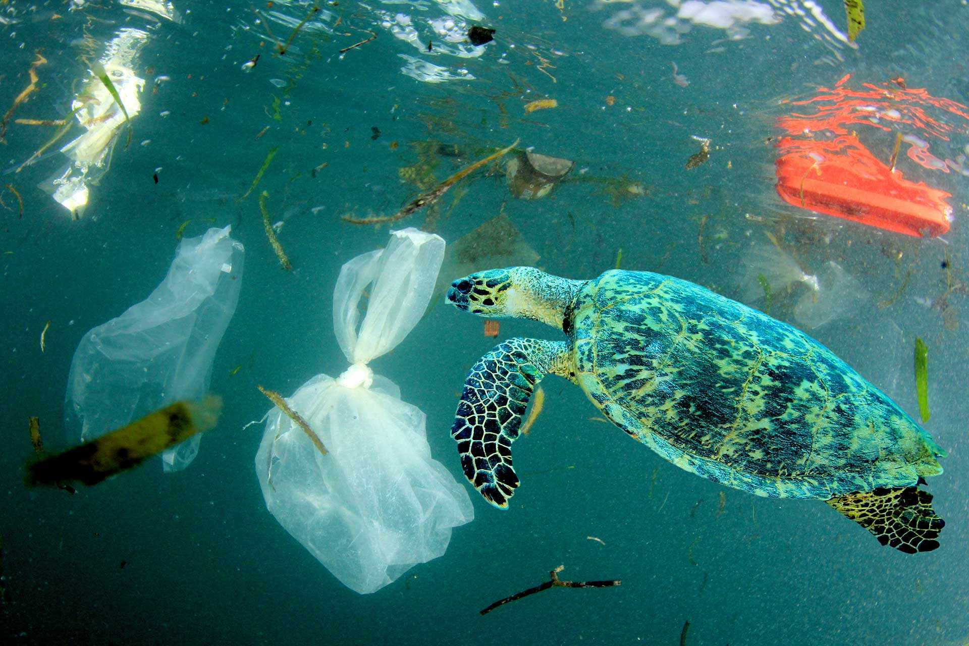 boldas de plastico (1)