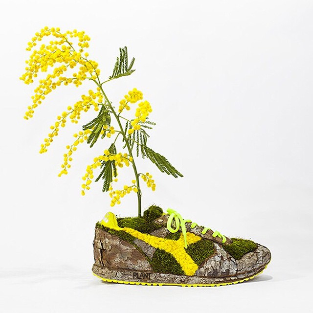 Monsieur Plant arte con plantas (9)
