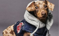 Dsquared2 junto a Poldo Dog Couture presentan una colección de ropa para perros (1)